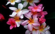 Beautiful Flower Wallpaper 13 Hd Wallpaper