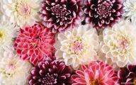 Beautiful Flower Wallpaper 17 Widescreen Wallpaper