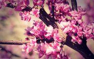 Best Pink Flowers 12 Free Hd Wallpaper
