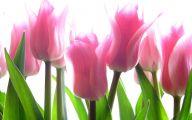 Best Pink Flowers 15 Cool Wallpaper