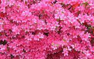 Best Pink Flowers 2 Cool Hd Wallpaper