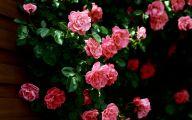Best Pink Flowers 5 Desktop Wallpaper