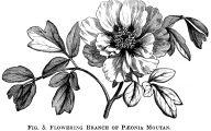 Black Flower Clip Art  38 High Resolution Wallpaper