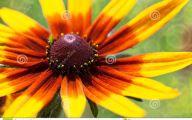 Black Flower Gardens  6 Background Wallpaper