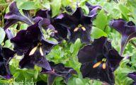 Black Flowers For Sale 13 Desktop Wallpaper