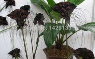 Black Flowers For Sale 8 High Resolution Wallpaper