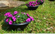 Black Flowers On The Pot 9 Cool Hd Wallpaper