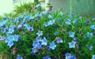 Blue Flowers Garden 13 Widescreen Wallpaper
