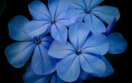 Blue Flowers Garden 2 Widescreen Wallpaper