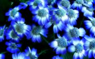 Blue Flowers Garden 3 Cool Wallpaper