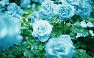 Blue Flowers Garden 4 Hd Wallpaper