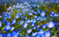 Blue Flowers Garden 7 Wide Wallpaper