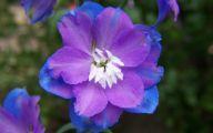 Blue Flowers Garden 9 High Resolution Wallpaper
