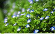 Blue Flowers In Spring 11 Desktop Background