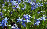 Blue Flowers In Spring 14 Wide Wallpaper