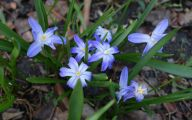 Blue Flowers In Spring 15 Background Wallpaper