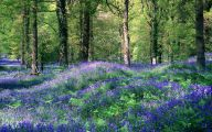 Blue Flowers In Spring 20 Desktop Background