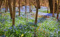 Blue Flowers In Spring 21 Wide Wallpaper