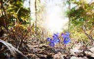 Blue Flowers In Spring 22 Desktop Background