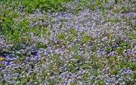 Blue Flowers In Spring 3 Desktop Background