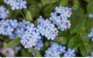 Blue Flowers In Spring 6 Cool Hd Wallpaper