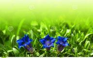 Blue Flowers In Spring 7 Widescreen Wallpaper