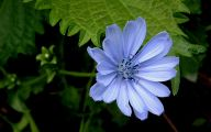 Flower Wallpaper 3D 11 Widescreen Wallpaper