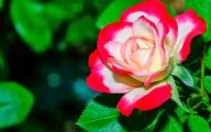 Flower Wallpaper 3D 4 Free Hd Wallpaper