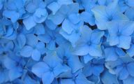 Flower Wallpaper Decoration 17 Free Wallpaper