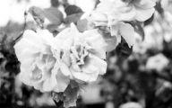 Gorgeous Black Flowers 5 Desktop Background