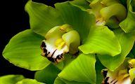 Green Flowers Wallpaper 6 Free Hd Wallpaper