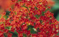 Little Red Flowers 20 Free Hd Wallpaper