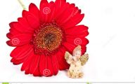 Little Red Flowers 23 Hd Wallpaper