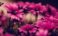 Pink Flowers In Bloom 12 Widescreen Wallpaper