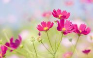Pink Flowers In Bloom 13 Hd Wallpaper