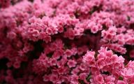 Pink Flowers In Bloom 6 Cool Wallpaper