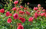 Pink Flowers In Summer 17 Desktop Wallpaper