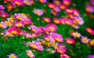 Pink Flowers In Summer 19 Desktop Background
