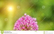 Pink Flowers In Summer 23 Background
