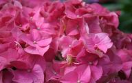 Pink Flowers In Summer 24 Wide Wallpaper