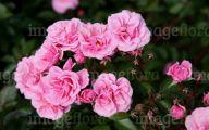 Pink Flowers In Summer 27 Background Wallpaper