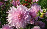 Pink Flowers In Summer 28 Background