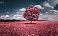 Pink Flowers In Summer 3 Cool Wallpaper
