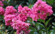 Pink Flowers In Summer 4 Free Hd Wallpaper