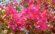 Pink Flowers In Summer 5 Widescreen Wallpaper