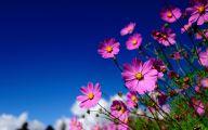 Pink Flowers In Summer 6 Free Wallpaper