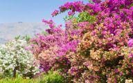 Pink Flowers In Summer 8 Desktop Wallpaper
