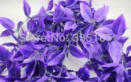 Purple Flowers Flower Decoration 34 Widescreen Wallpaper