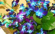 Purple Flowers In Funeral 4 Desktop Background