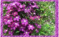 Purple Flowers In Funeral 7 Free Wallpaper